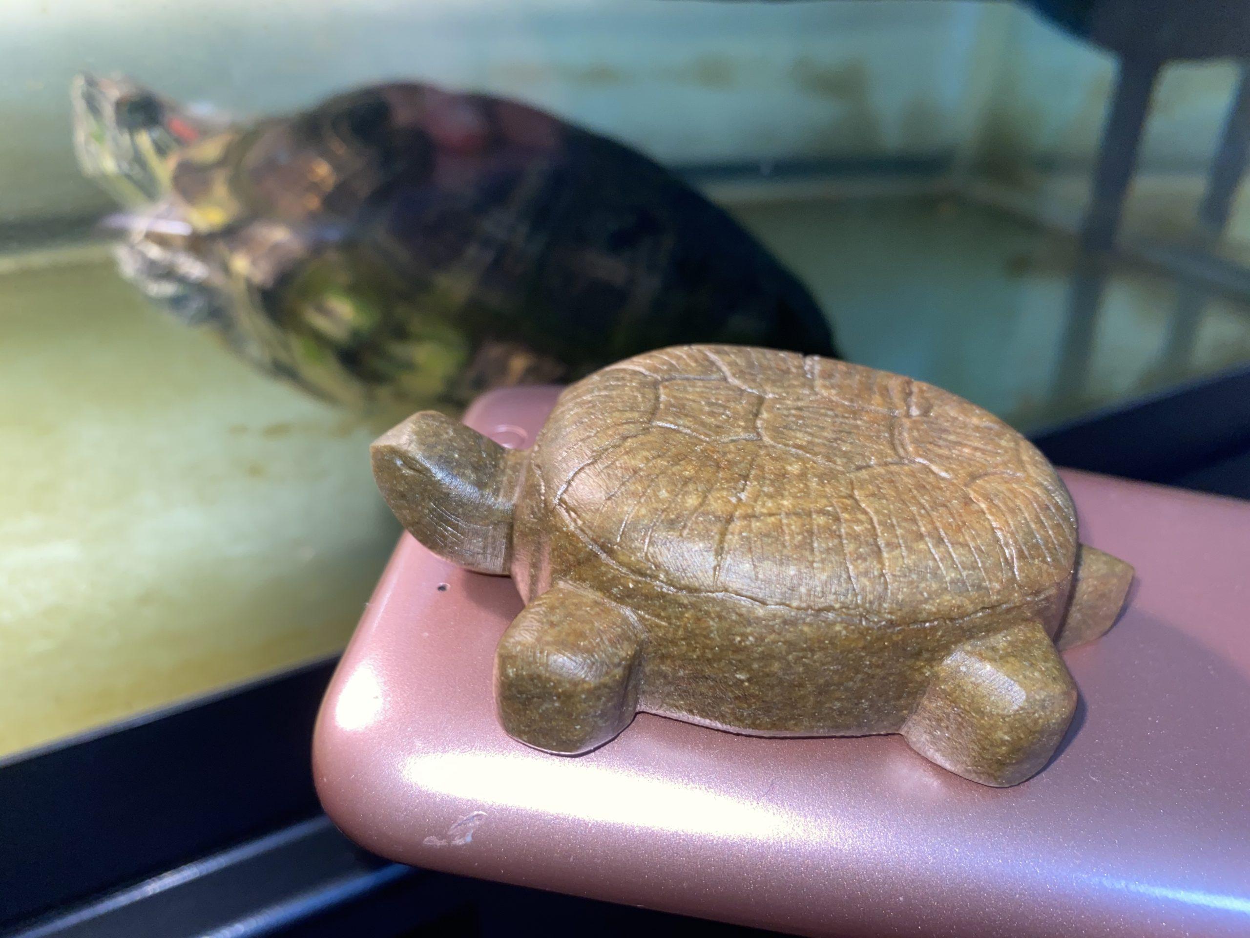 Sculpture d'une tortue en pierre à savon avec une vraie tortue